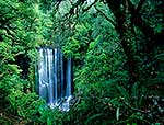 Urewera National Park